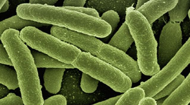 استفاده از باکتری برای تامین انرژی باتری