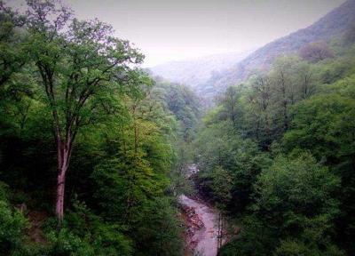 تمدید مهلت ارسال آثار به جشنواره ثبت جهانی جنگل های هیرکانی