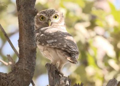 48 فیلم مستند محیط زیستی و حیات وحش متقاضی شرکت در سینماحقیقت
