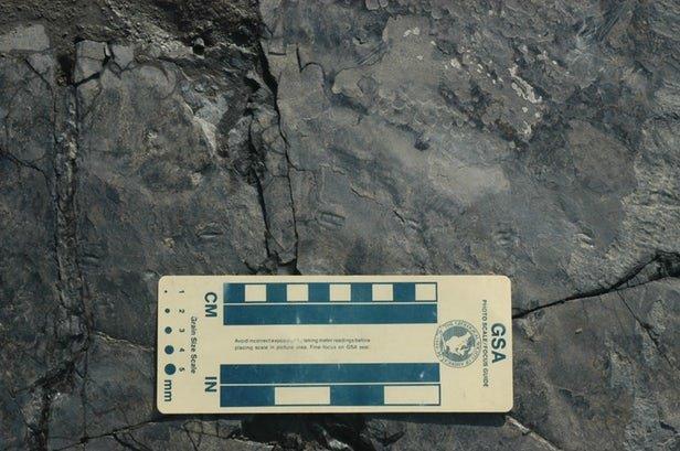 کوچکترین ردپای دایناسور جهان کشف شد