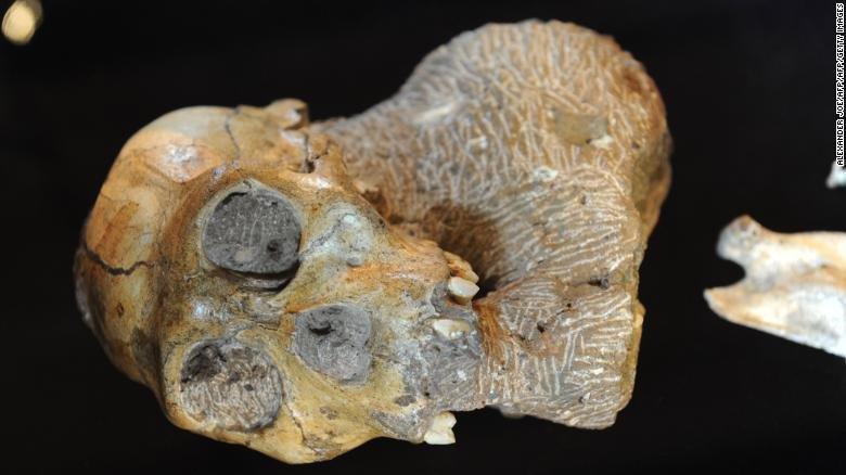 انسان 2 میلیون سال پیش از درخت آویزان می گردیده است