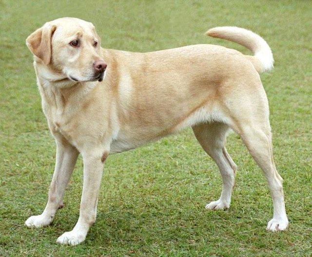 ترغیب سگ های گله برای آزار رساندن به حیات وحش جرم است