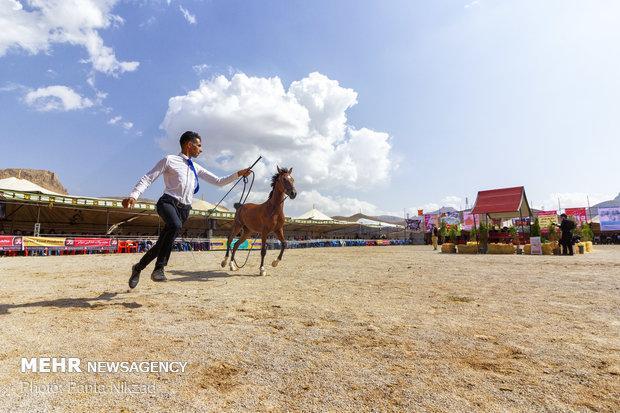 نخستین جشنواره ملی اسب دره شوری در فرخ شهر برگزار گردید