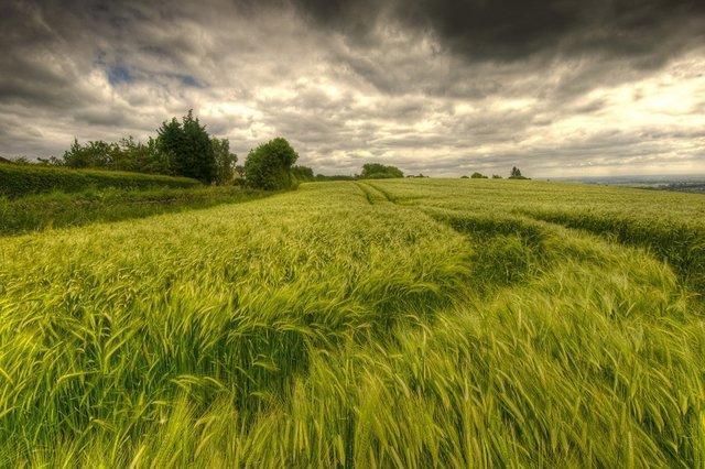 توصیه های زمستانی هواشناسی کشاورزی
