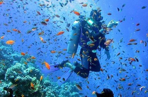 خفگی مرجان ها در جزیره لارک و سفیدشدگی در شیدور، حضور محیط بانان دریایی در خلیج فارس