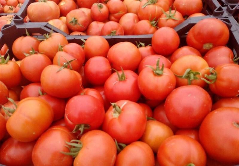 علت برگشت خوردن هندوانه و گوجه فرنگی ایرانی از عمان، وزارت جهاد کشاورزی به موقع اطلاع رسانی نمی کند
