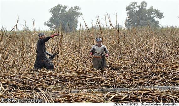 شرح فرماندار شوش در مورد فیلم منتشرشده ضدعفونی کارگران نیشکر