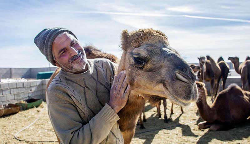 ادعاهای درمانی عجیب برای مقابله با کرونا ، از ادرار شتر در ایران تا خون شتر در بلژیک!