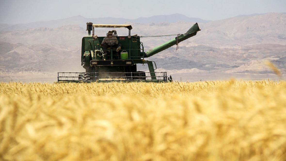 برداشت 140 هزار تن جو در استان قزوین