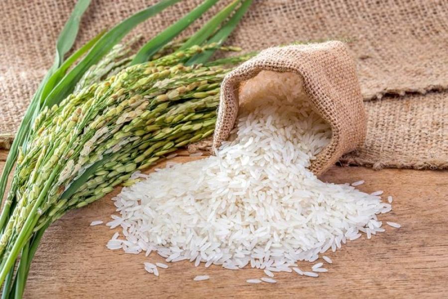 برنج یکی از محبوب ترین غلات در حال حاضر در جهان است