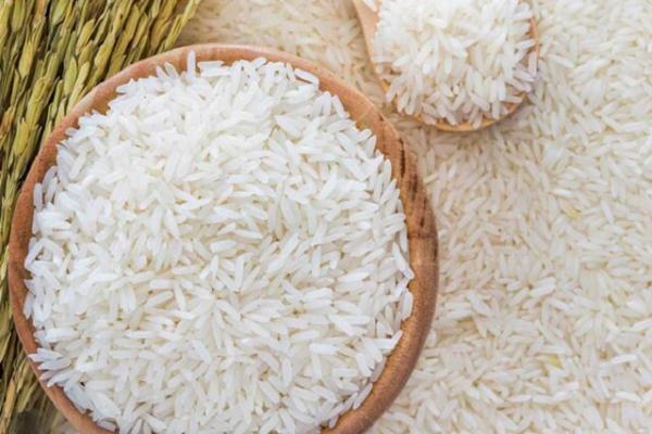 هاشمی و علی کاظمی بیشترین رقم کشت شده برنج در گیلان