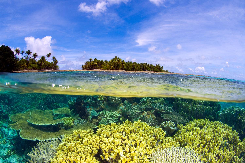 جزیره مرجانی در پاتایا