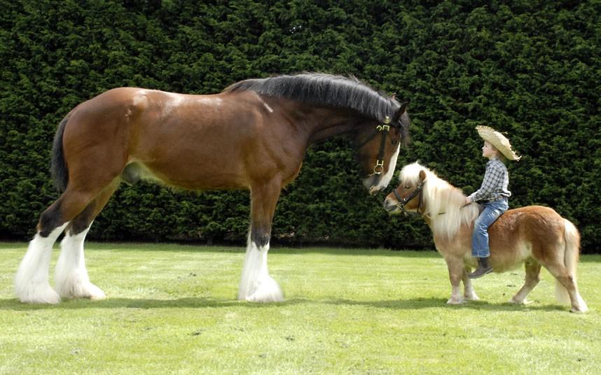 اسب های زیبای پونی