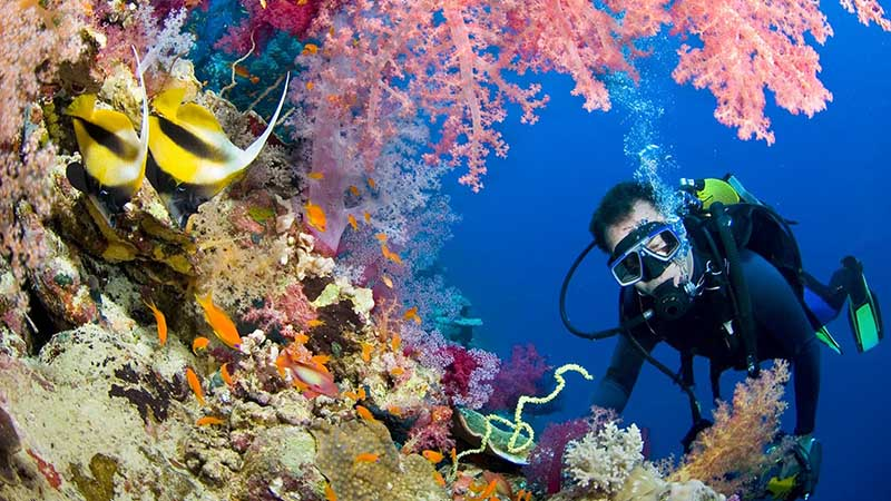 غواصی در تور تایلند